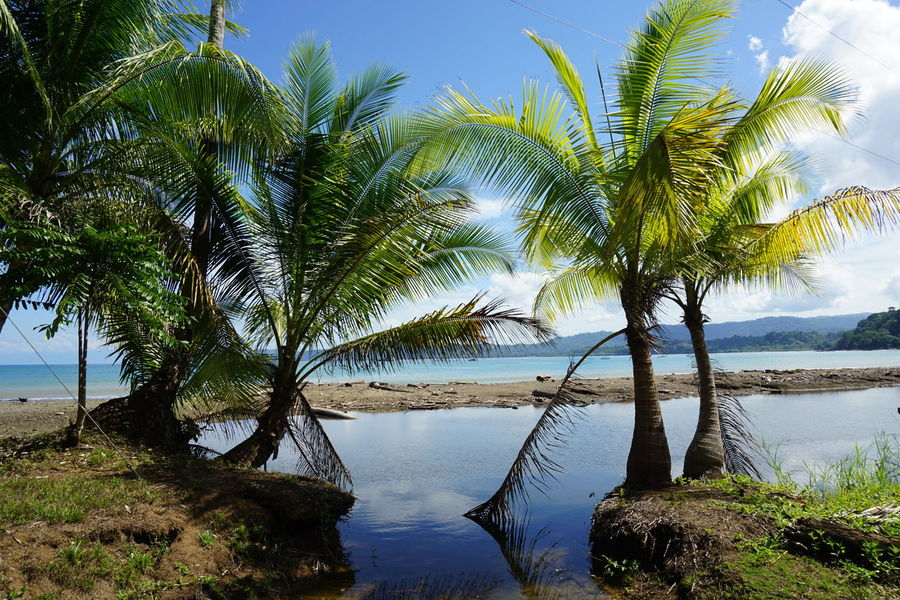 Costa Rica Beach Empty Beach Tropical Paradise Beach Beauty In Nature Day Deserted Beach Green Trees Nature No People Outdoors Palm Tree And Sky Palm Trees Scenics Sea Sky Sun Reflection Sun Trough Leaves Tree Tropical Plants Tropical Scenery Water