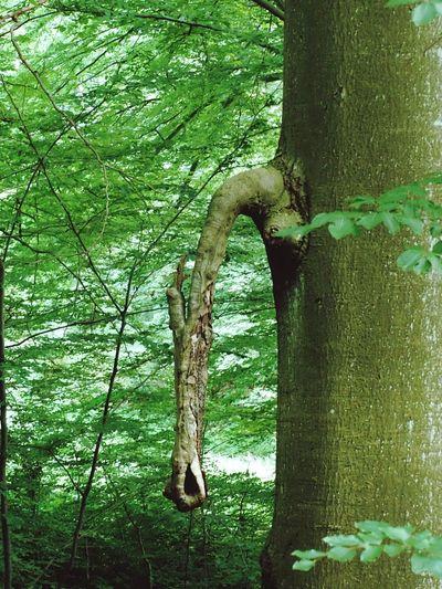 Ein Ganz Normaler Baum....oder Doch Nicht?😁 Wildlife & Nature Naturelovers Urban Nature 😚