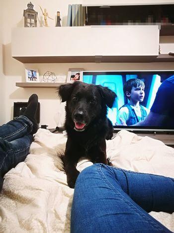 Pets Sitting Dog Friendship