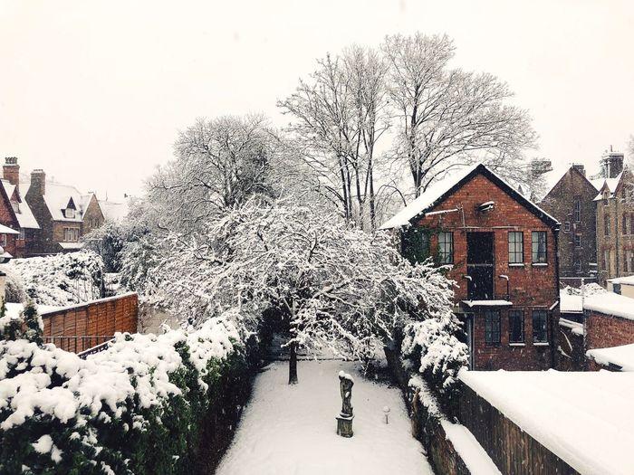 Oxford Backyard