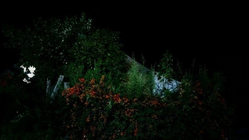 Moon EyeEm House Nightphotography Tree Spraying Water Grass Green Color Idyllic Countryside Tranquility Non-urban Scene