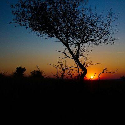 Sunset Sunset Silhouettes Silhouette Dusk Lights At Dusk Landscape Landscape_photography