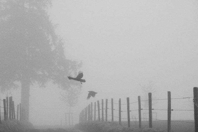 Fog Sky Nature Boundary Fence Day Barrier No People Flying Outdoors Architecture Copy Space Built Structure Mode Of Transportation Transportation Building Exterior Mid-air Motion Tree Limburg