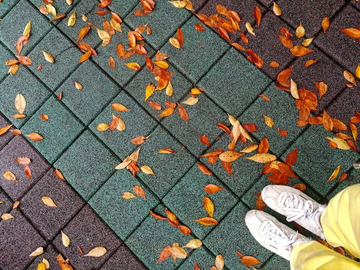 autumn colors Sneakers Wet Pavement Minimal Autumn Leaves Fall Fallen Leaves Orange Pavement Feet Multi Colored Backgrounds Full Frame Pattern Textile Close-up Textured  Mosaic Colorful Fallen Fallen Leaf Stone Tile Paved Leaves Dried Falling