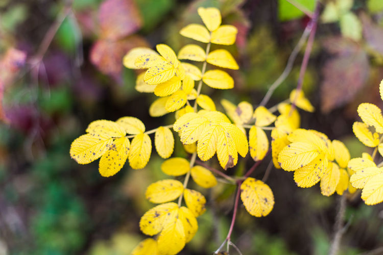 Nature Forest Autumn Yellow Plant Growth Beauty In Nature Close-up Fragility Vulnerability  Flowering Plant Focus On Foreground Flower Day Freshness No People Selective Focus Plant Part Outdoors Inflorescence Leaf Petal Flower Head