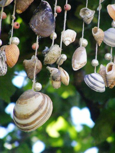 Decoration Vintage Decoration Close-up Mollusk