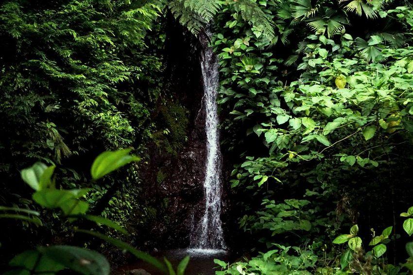 Let it flow. Costa Rica Puravida Manuelantonio Rainmaker