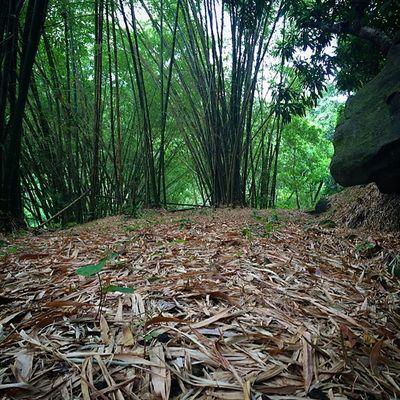 Caribbean_beautiful_landscapes Color_n_nature Nature_shooters Nature Ig_caribbean Islandlife Islandlivity Westindies_landscape Westindies_nature Wcscapes_land Wu_caribbean Grenada Bamboo