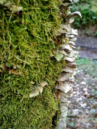 Tree Moss Fungus Fern Tree Trunk Close-up Plant Green Color Mushroom