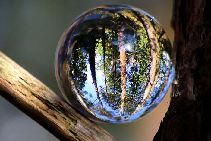 Nature Nature Photography Close-up No People Tree Nature Multi Colored Sphere Plant Reflection Glass - Material Transparent Shiny Tree Trunk Outdoors Circle Day Shape