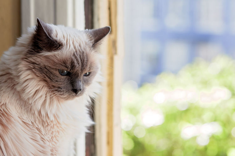 Close-up of a cat looking away at window