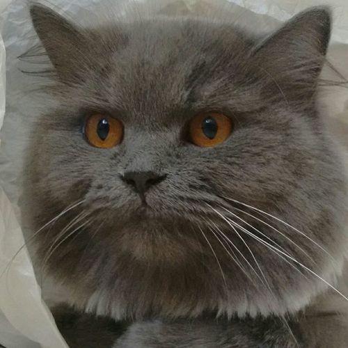 Lunascat Mypet Lovemypet Love Cat First Eyeem Photo