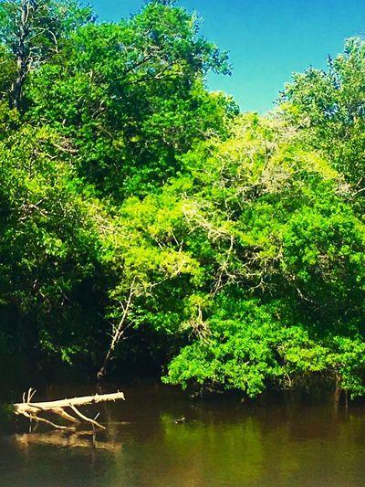 Rivergreen Nature Water