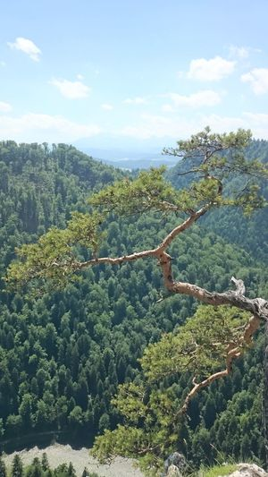Mountain Pieniny Mountains Sky Pieniny Poland River Sky Woods Landscape Wood Sokolica