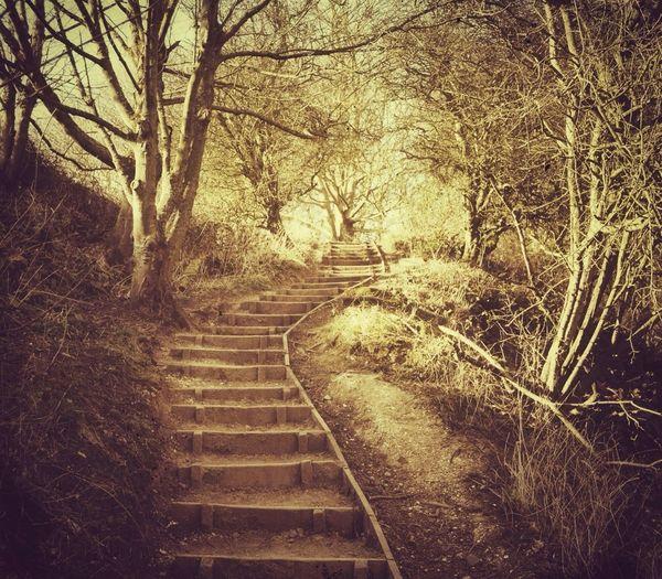 Stairway To Heaven Sepia A Walk In The Woods EyeEm Best Shots