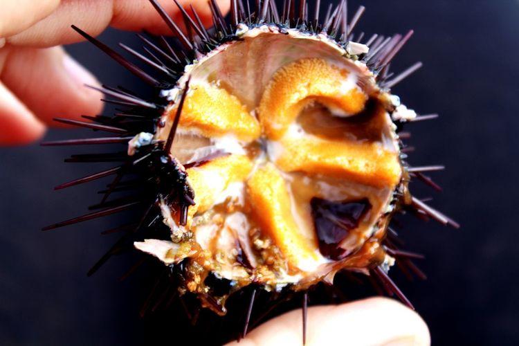 riccio di mare Riccio Mare Sea Sardegna Food Traditional Uova Italy Prelibatezze Macro Photography EyeEm Selects Human Hand Close-up Sweet Food Food And Drink