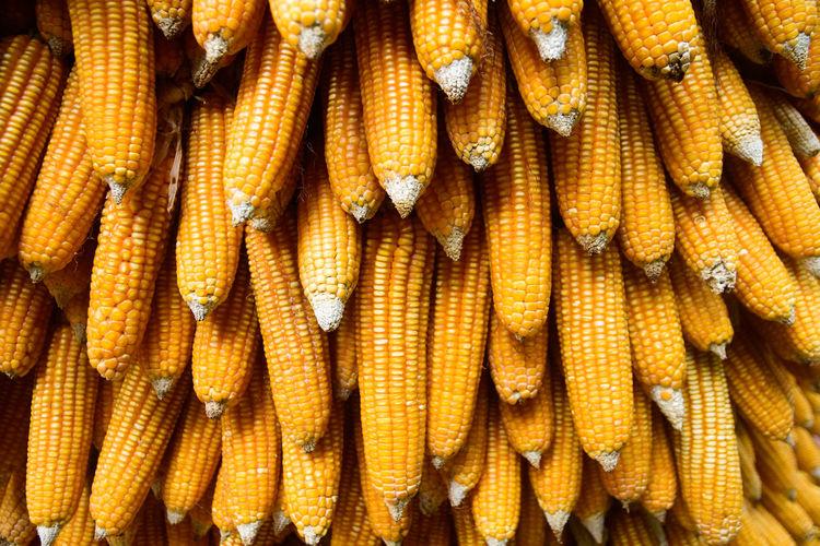 Full frame shot of corns for sale at market stall