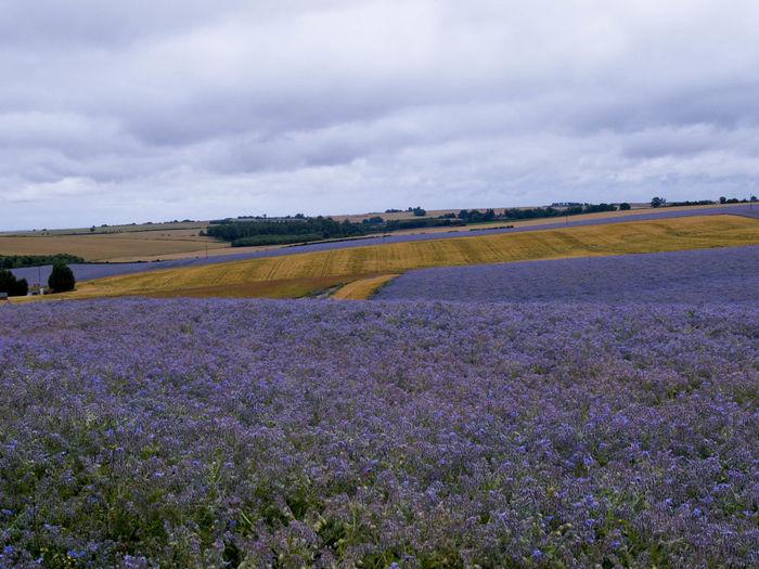 Lincolnshire Wolds Blue Landscape_photography Borage Colour Olympus E-5