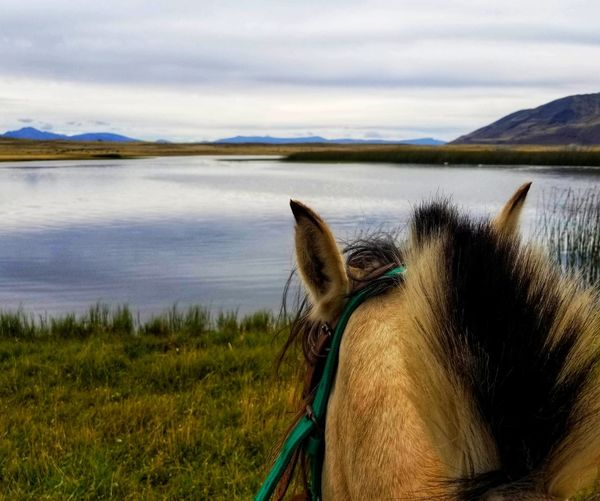 View of a horse in the water