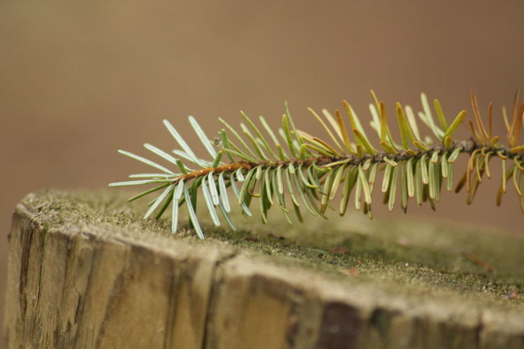 Close-up of plant on wood