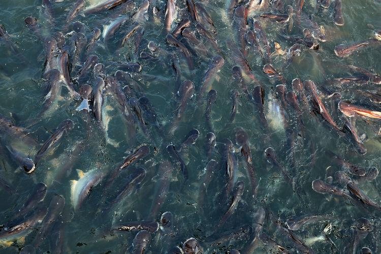 Full frame shot of fish swimming in sea