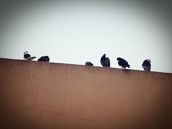 Birds of a feather Ways Of Seeing Animal Wildlife Silhouette Outdoors Perching Day Sky Togetherness Bird Eyeem Photography Monochrome Daylight Photography Perspectives On Nature Shadowplay Light And Shadows EyeEm Best Shots - Nature Close Up Overcast Skies Minimalism