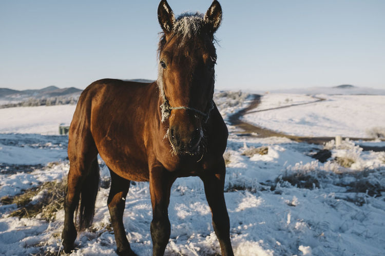 Cropped View Of Horse In Winter Against Clear Sky
