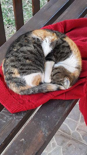 Kedi Sokak Hayvanlarına Mama Ve Su Ne De Güzel Uyuyor Eyem Onları Da Görelim