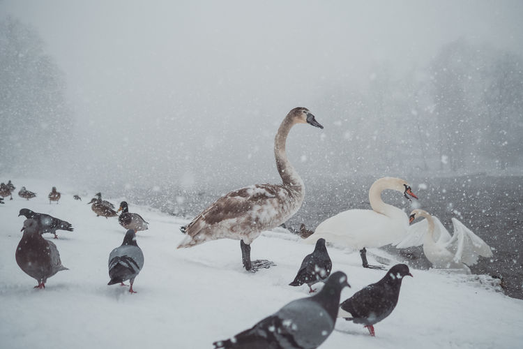 Birds perching on snow during winter