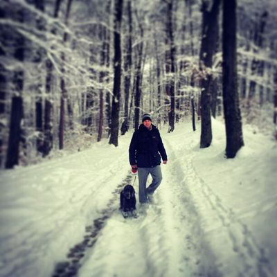 Instavse Winter Dog Fun forest