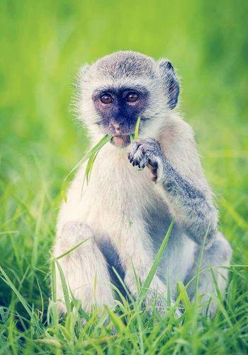 Monkey First Eyeem Photo