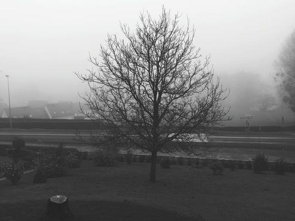 la Normandie dans le brouillard