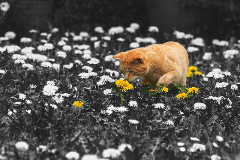 Dog on flowers
