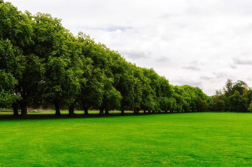 Green lawn and trees Plant Green Color Sky Tree Growth Beauty In Nature Grass Nature Tranquility Field Cloud - Sky No People Tranquil Scene Land Day Scenics - Nature Environment Landscape Outdoors Park