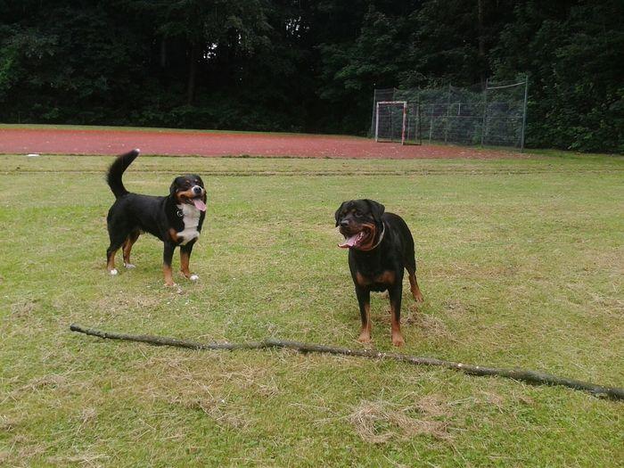 Freya Mit Rocky Hunderunde Hundefreundschaft Dogs Dogdog Taking Photos Dogslife EyeEm Selects Pet Portraits
