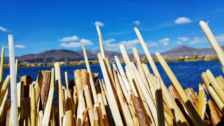 Lake Titicaca: the Uros islands SkyEyeEm Selects Blue Outdoors Nature Day Landscape Plant No People Growth Mountain Close-up Travel Travel Destinations First Eyeem Photo Peru Vacations Uros Uros Island Lake Titicaca