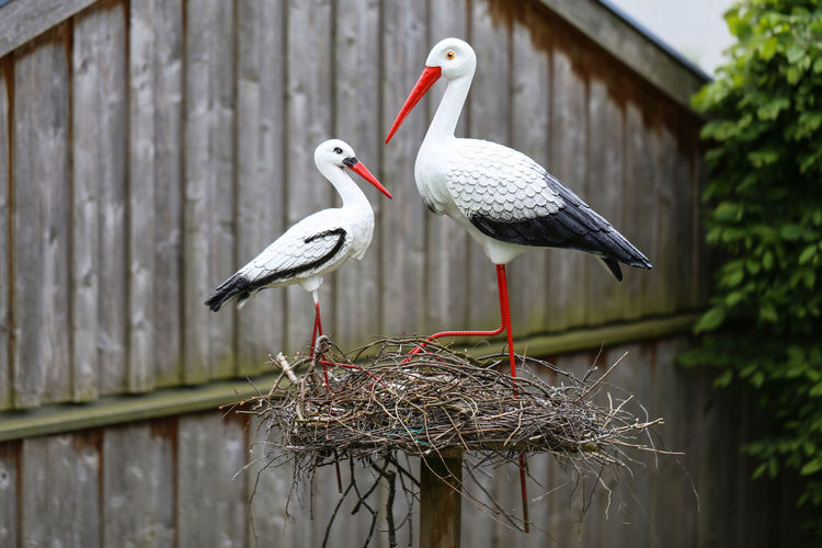 Animal Animal Nest Animal Themes Animal Wildlife Animals In The Wild Architecture Beak Bird Building Exterior Built Structure Day Focus On Foreground Garden Group Of Animals Nature No People Outdoors Perching Stork Two Animals Vertebrate Wood - Material