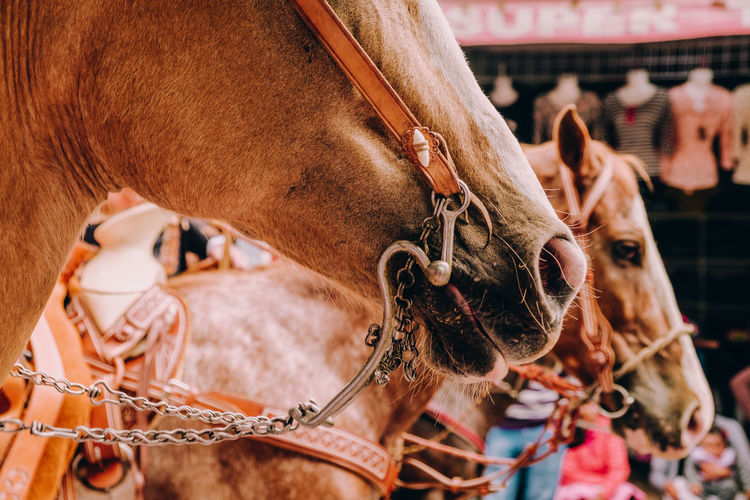 Caballos Domestic Animals Mammal Livestock Domestic Animal Animal Themes Pets Vertebrate Animal Wildlife Animal Body Part Focus On Foreground Horse One Animal Close-up Bridle Working Animal Animal Head  Herbivorous Day Outdoors Ranch