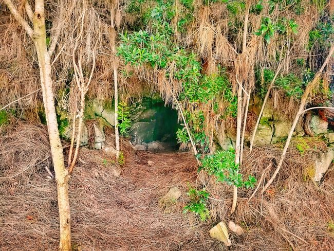 Day Full Frame Outdoors Backgrounds No People Sunlight Tree Tenerife Close-up Grotto Grottos Trail Cave Entrance Cave Photography Cave Beautiful Nature Nature Landscape Beauty In Nature Forest Cavern Entrance The Great Outdoors - 2017 EyeEm Awards The Great Outdoors - 2017 EyeEm Awards