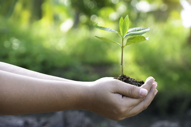 Cropped Hands Holding Sapling