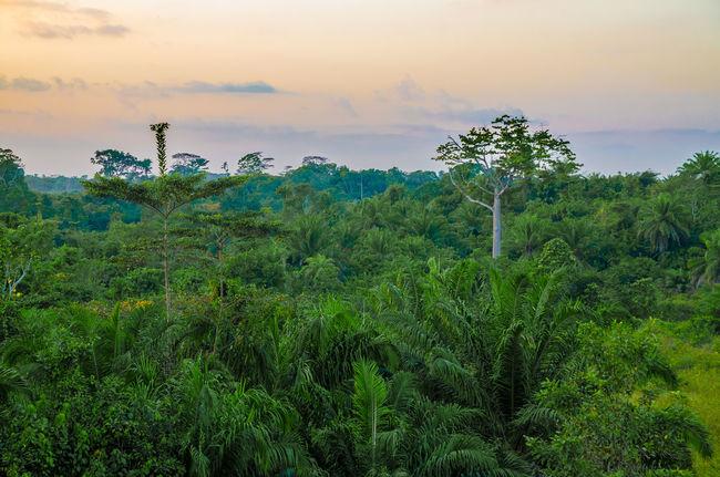 Nature Africa African Landscape Jungle Forest Rainforest Rain Forest Liberia Liberian West Africa Lush Lush Foliage Sunset