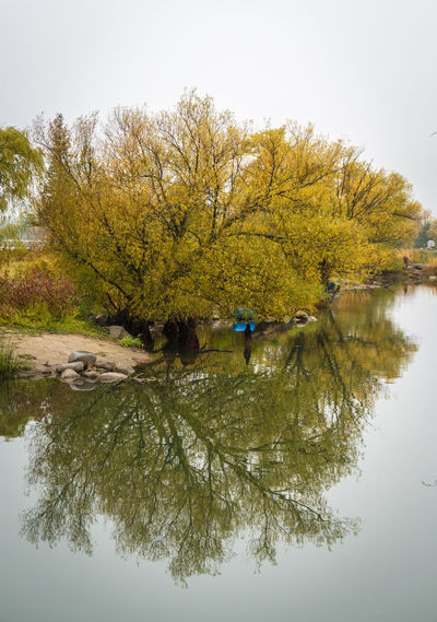 Calm Green Lakefront Mirror Serenity Water Reflections Autumn Beauty In Nature Change Clear Sky Day Grey Lake Nature Outdoors Reflection Sand Scenics Sky Tranquil Scene Tranquility Tree Water Waterfront Yellow Perspectives On Nature Autumn Mood