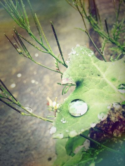 drop. Cute Photography Japan Green Drops Goodmorning