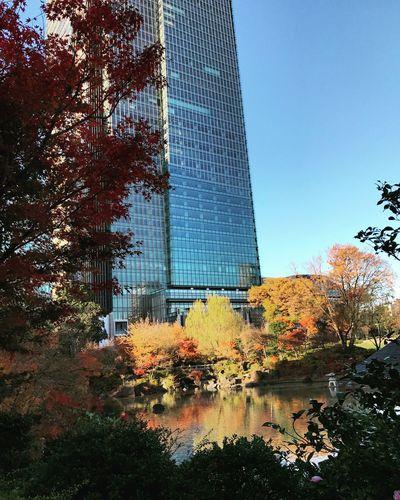 Tokyo,Japan Architecture Building Exterior Tree Built Structure Sky Plant Nature