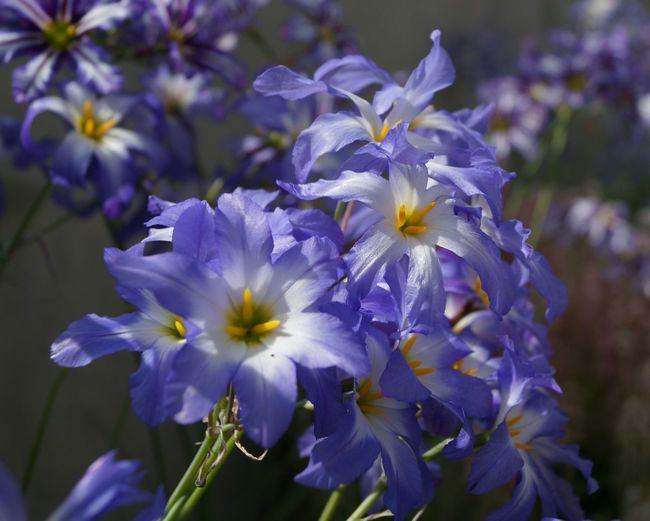 Macro_collection Macro Photography Flowers 🌸🌸🌸 Kew Gardens Royal Botanic Gardens