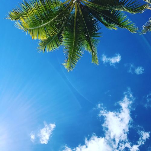 Palm Palm Tree Sky Blue Nature Low Angle View Tree Beauty In Nature Tranquility Scenics Growth No People Outdoors Day Palm Frond Lifestyles Hawaii Beachphotography Nature