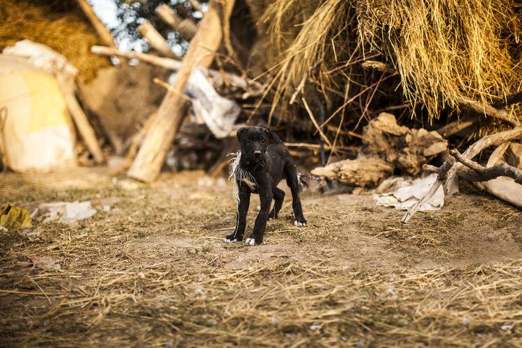Close-up of dog black dog against damaged building