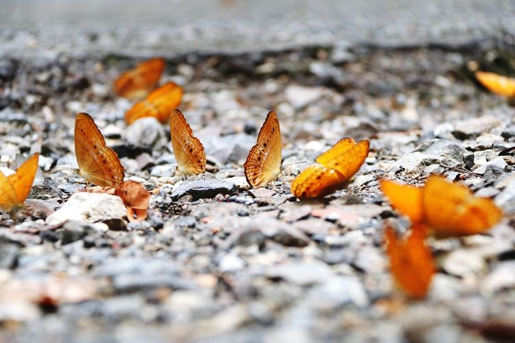 Close-up Of Butterflies On Ground
