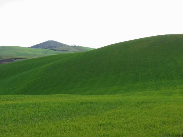 Rolling green hills in Tuscany, Italy Background Countryside Day Environmental Field Foliage Forest Fresh Freshness Grass Grassland Green Growth Hills Leaf Lush Meadow Organic Outdoors Pasture Plant Scenery Space Spring Tuscany