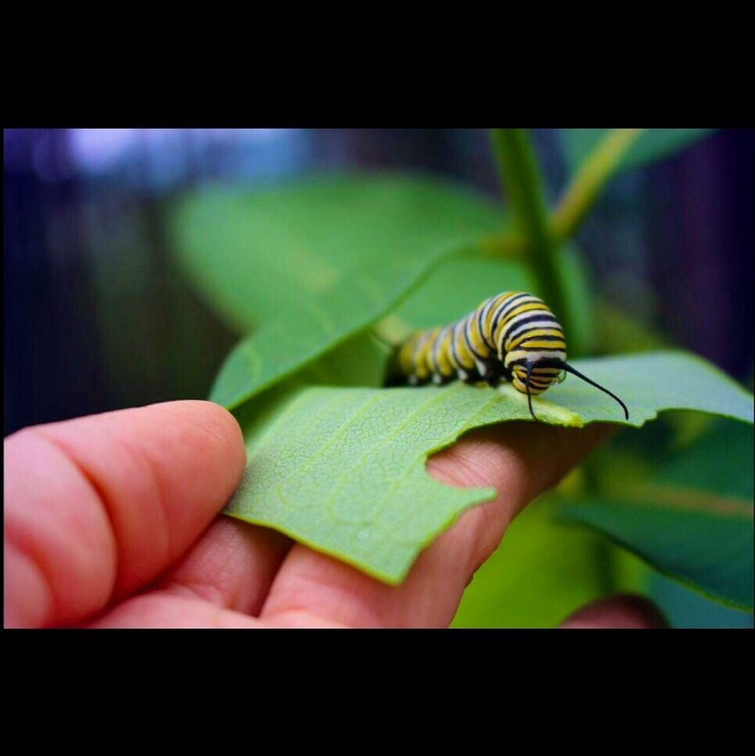 one animal, animal themes, animals in the wild, wildlife, person, insect, holding, human finger, transfer print, close-up, part of, focus on foreground, cropped, auto post production filter, unrecognizable person, nature, bird